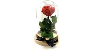 trandafirii-criogenati